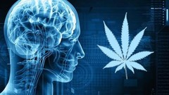 Brain and marijuana