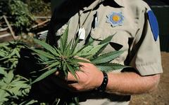 Marijuana law